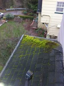 Portland Moss Removal