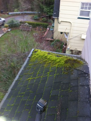 Portland OR Moss Removal
