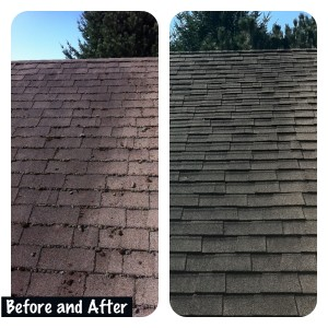 Portland or Roof Cleaning