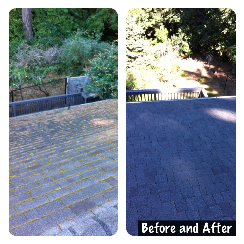 We Specialize In Portland Moss Removal Or Amp Portland